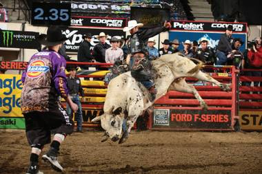 As the cowboys are riding for the big prize, the bulls are bucking for it.