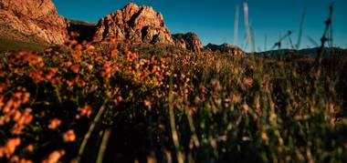 Red Rock Canyon is no longer a well-kept secret among hardcore climbers. Since the Great Recession, the conservation area has reported an uptick in visitors year over year, with attendance in 2018 reaching an all-time high of 3 million people ...