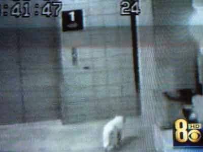 A surveillance camera shows a cat walking in the parking garage  in the Jim Gibbons-Chrissy Mazzeo assault investigation.