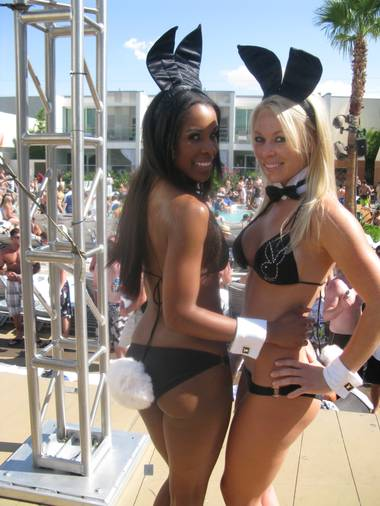 Two bunnies who have made the cut and now recruit other beauties to the cause.