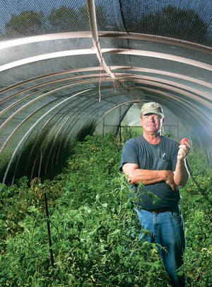 Green Giant: Jesse Scott of Buckhorn Ranch shows off a tomato inside one of his hoop houses.