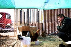 Vadim Bolotsky hangs out with his chickens in the backyard of his home in Pahrump November 11, 2010.
