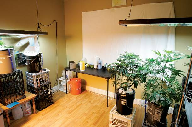 Grow your own green: A local patient's home hydroponic setup.