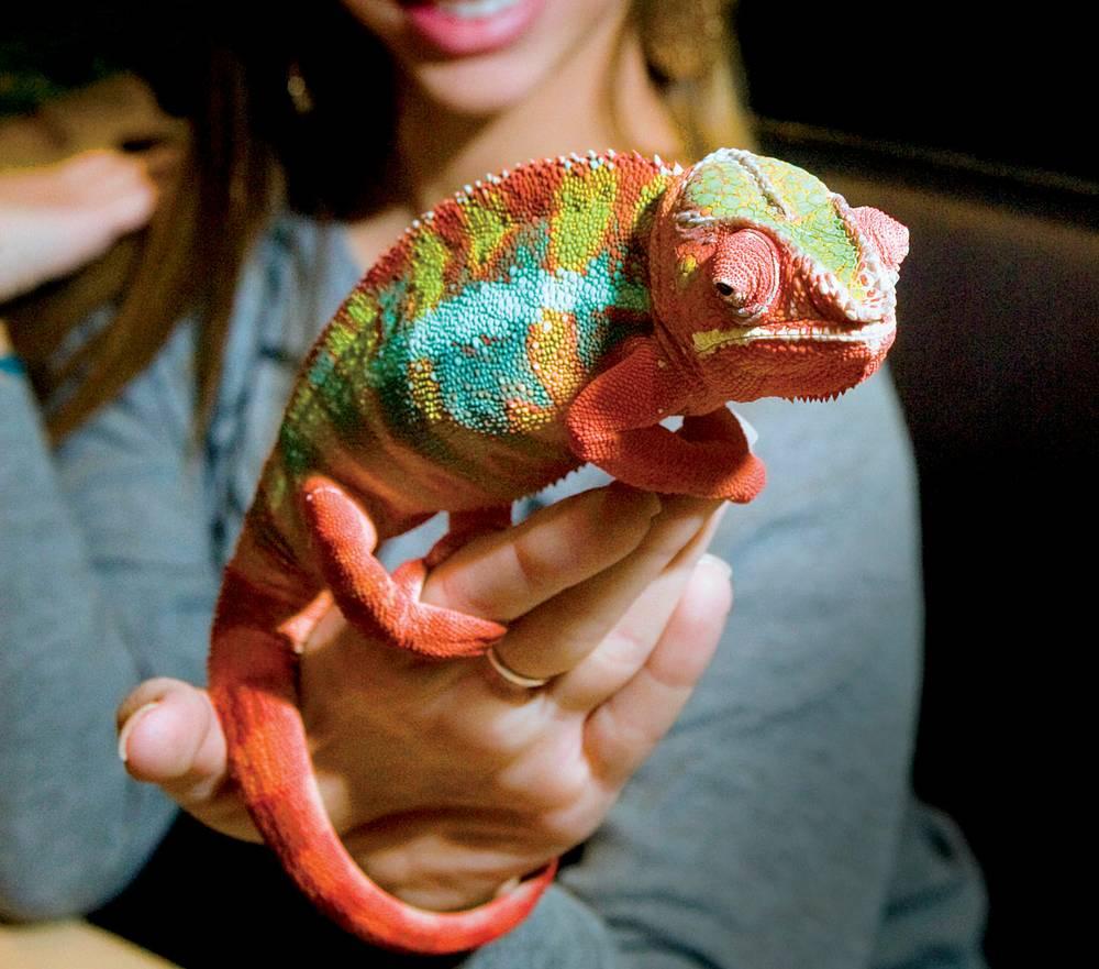 Texas Reptile Expo