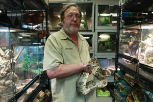 Owner Kevin Foose holds a snake at his Exotic Pets store in Las Vegas. Foose has decades of experience working with exotic animals and says he has about 1,000 animals living in his home.