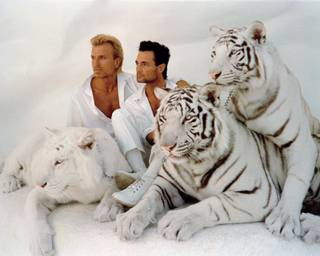 Former Strip headliners Siegfried & Roy entertained Strip audiences for decades. John Katsilometes' follow-up report 10 years after Roy's unfortunate incident with the duo's white tiger, Montecore, made the Weekly's Top 10 most-read stories of 2013.