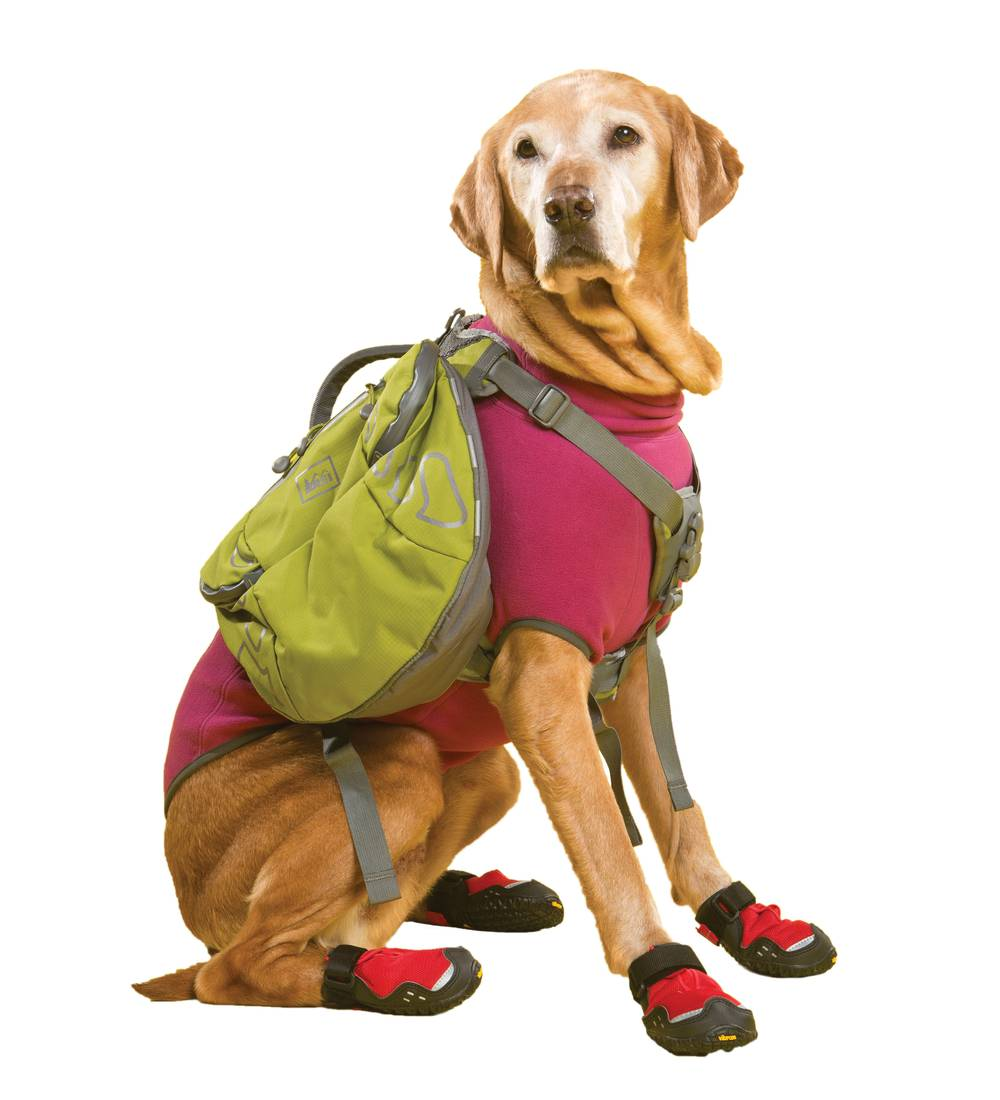 Gear To Outfit Your Dog With For Your Next Hiking Adventure And Dog Friendly Hikes Las Vegas Weekly