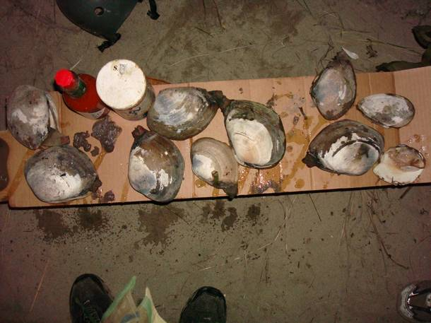 Air Force S.E.R.E. Specialist Robert Miner says these Pacific Northwest geoducks are easy to dig up in low tide and