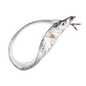 Sciabola, the silver blade fish used in Bartolotta's frittura.