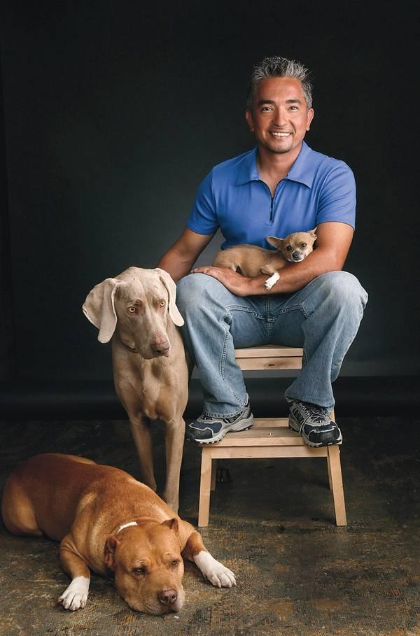 Cesar Millan Best Dog Food