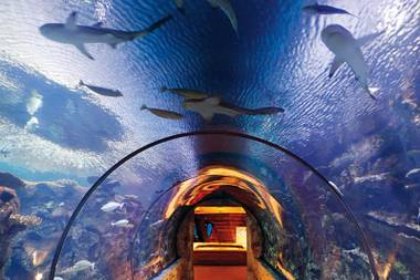To feed a predator: If you really need a shark fix, head to Mandalay Bay's Shark Reef Aquarium and serve up some lunch.