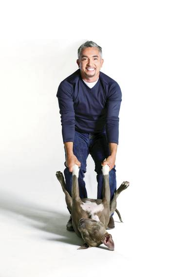 One of Cesar Millan's recent pack additions, Junior, made an appearance on the Pearl stage during Millan's Leader of the Pack show Friday, August 15.