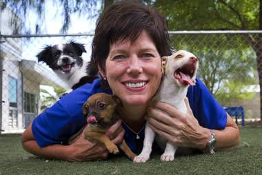 Christine Robinson, executive director of the Animal Foundation, plays with chihuahua puppies at the shelter. The Foundation's Doggone Homes Fee-Waived Weekend was a complete success, with all 364 adoptable dogs finding homes.