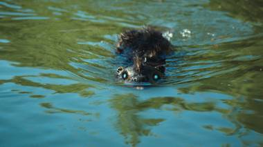 Two words: Zombeavers. Wait, that's one word.