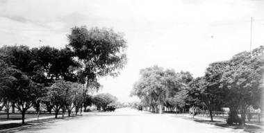 Umbrella trees and elms lined Fremont Street in the 1910s.
