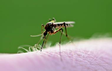 West Nile Virus-positive mosquitos have been found in eight local zip codes.