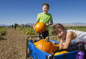 Gilcrease Orchard's Pumpkin Patch