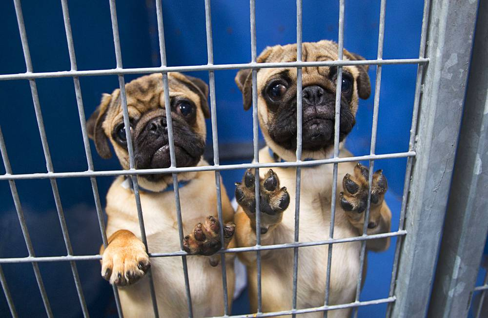 shop and adopt what you need to know about vegas new pet