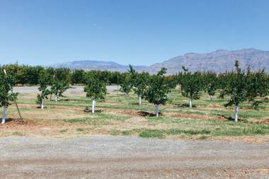 Pick your produce fresh at the nearby Gilcrease Orchard.