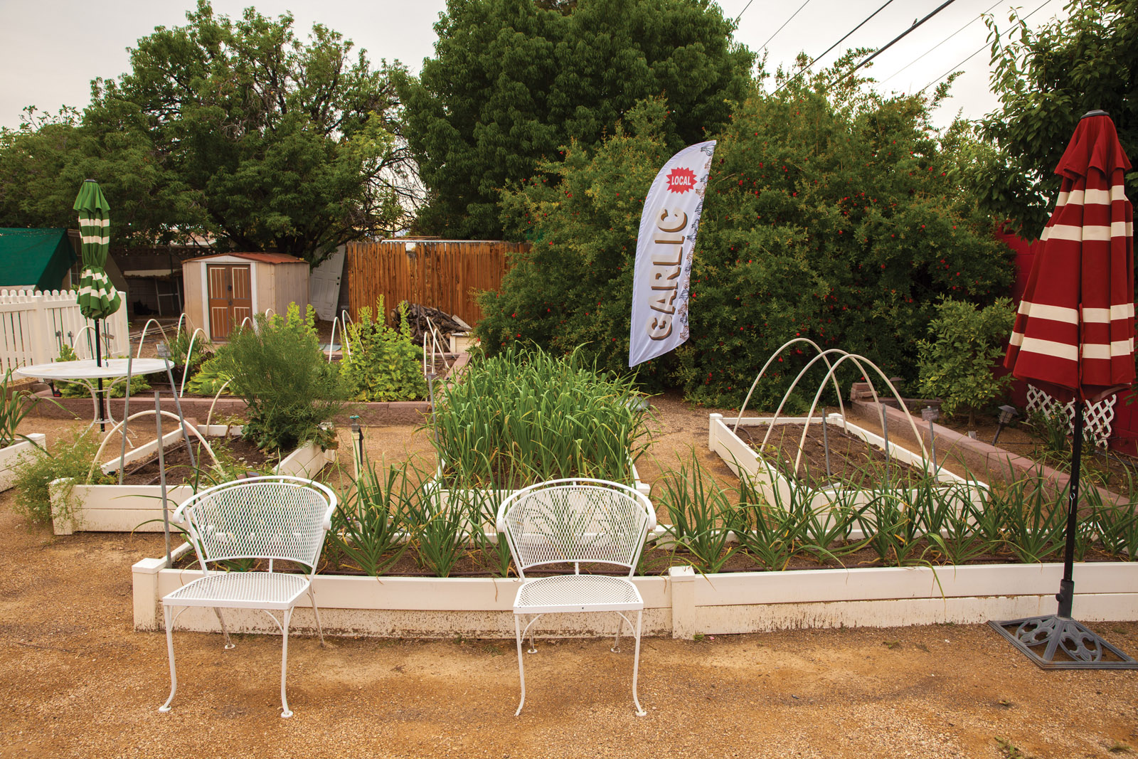 A quick look at the Sweet Tomato Test Garden - Las Vegas Weekly