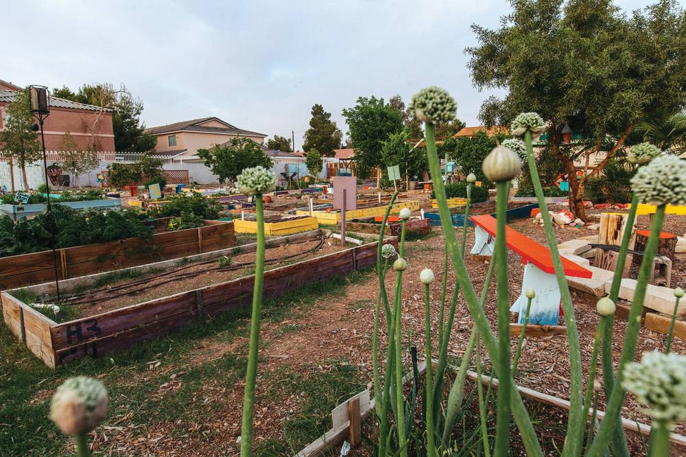 Charmant Coaxed From The Urban Core By Sheer Will And Plenty Of Sweat, Community Garden  Vegas Roots Just Wonu0027t Stop Blooming