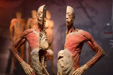 Real Bodies delves deeper into the sociocultural, emotional and historical relationships bound with the body.