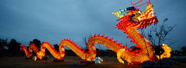 Starting January 19, Craig Ranch Regional Park will transform nightly into a glowing wonderland, building up to a Chinese New Year blowout on February 16.