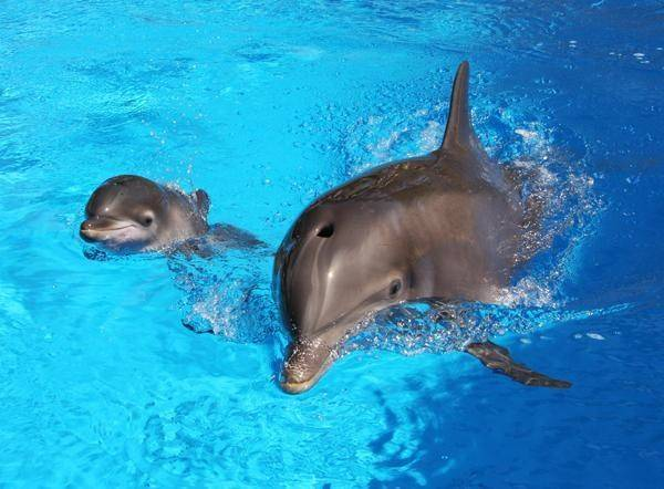 Siegfried Roy S Secret Garden And Dolphin Habitat Las Vegas Sun News
